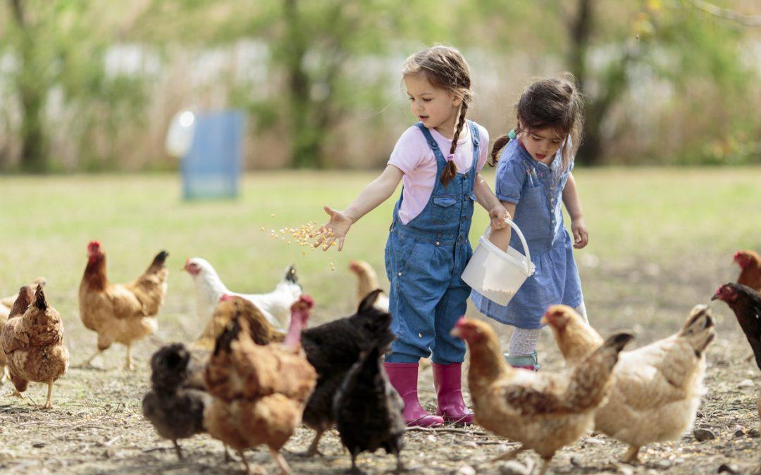 Al Villaggio dei Bambini fattorie didattiche, cavalli, cani, giochi e tanto divertimento